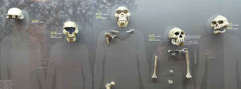 Funde des Homo Erectus in Dmanissi - Nationales Museum in Tbilissi - Archäologische Funde in Georgien